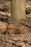 Old milk can in the forest Stock Photos