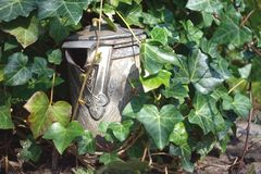 Old Milk Can with Ivy royalty free stock photography