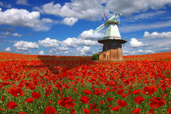 Free Old Mill On A Background Of The Poppies Plantation Royalty Free Stock Images - 13244749