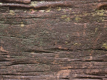 Old and moist wood texture Royalty Free Stock Image
