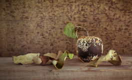 Old mold apple and dried leaves Royalty Free Stock Photos