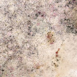 Old Moldy Cardboard Background Royalty Free Stock Photos