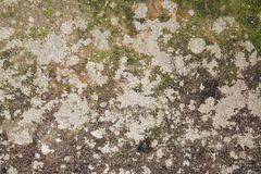 Old moldy and neglected wall 2 royalty free stock photography