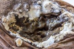 An old moldy potato Royalty Free Stock Photography