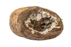 An old moldy potato Stock Photography