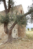 Old monastery in Crete with olive tree Royalty Free Stock Photography