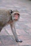Old Monkey. In Khao Wang Royal Palace, Phetchaburi, Thailand Royalty Free Stock Images