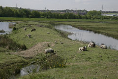 Old Moor RSPB Royalty Free Stock Image
