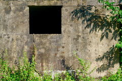Old morbid plaster wall. With an opening behind plants Royalty Free Stock Images