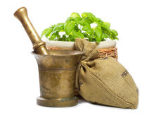 Old mortar with spices and fresh green basil Royalty Free Stock Photography