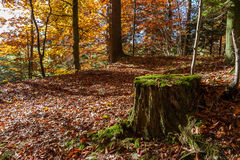 Old moss covered tree stump in a forest Royalty Free Stock Photography