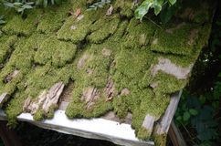 Old moss covering the roof Stock Image