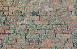 Old moss-grown brick wall as background Stock Images
