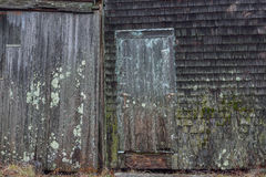 Old moss and mold covered clapboard siding of a lobster dock fis Royalty Free Stock Photo