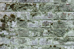Old mossy brick wall Stock Photography