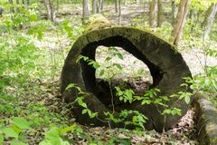 Old mossy fallen tree with a hole. Selective focus Stock Photos