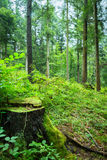 Old mossy green wood trunk Stock Photography