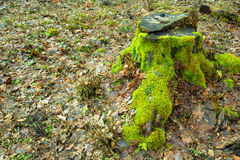 Old mossy green wood trunk Royalty Free Stock Photos