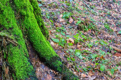 Old mossy green wood trunk Stock Photo