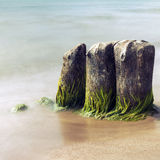 Old mossy groynes in the sea. Long exposure picture of old mossy groynes in the sea with smooth water. Picture with cross processing effect Royalty Free Stock Photo