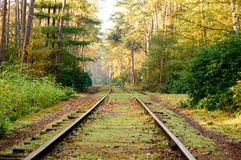 Old mossy railroad tracks in dense hardwood forest. Old mossy railroad tracks curved and extending into the distance in dense hardwood forest with fallen leaves Stock Photo