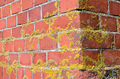 Old mossy red brick wall corner backdrop Royalty Free Stock Image