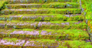 Old Mossy Stairs Stock Image