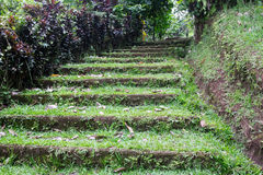 Old mossy stairs covered with grass in jungle Royalty Free Stock Photography
