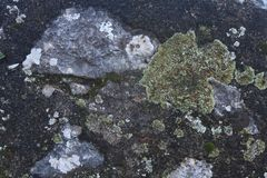 Old mossy stone close up. texture, background Stock Photography
