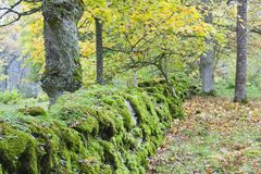 Old mossy stone wall Stock Photography