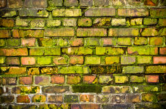 Old mossy wall Royalty Free Stock Photo