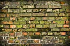 Old mossy wall Stock Image