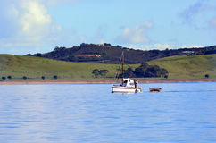 Old motorboat sail in the Bay of Islands New Zealand. PAIHIA,NZ - MAY 11 2014:Old motorboat sail in the Bay of Islands.It is one of the most popular fishing stock photography