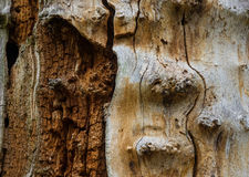 The old and mouldering  bark of  tree Royalty Free Stock Photos