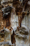 The old and mouldering  bark of  tree Royalty Free Stock Images