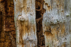 The old and mouldering  bark of  tree Stock Image