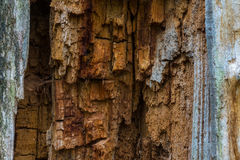 The old and mouldering  bark of  tree Stock Images