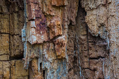 The old and mouldering  bark of  tree Stock Photography