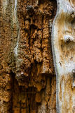 The old and mouldering  bark of a tree Royalty Free Stock Image