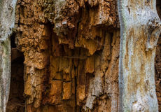 The old and mouldering  bark of  tree Royalty Free Stock Photography