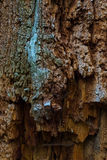 The old and mouldering  bark of  tree Stock Photos