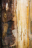 Old mouldering oak wood texture Royalty Free Stock Photography