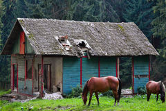 An old mountain refuge in a deserted mountain area with two horses in front of it on a green meadow with a background a pine fores Stock Image