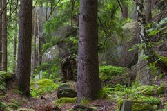 Old Carpathian forest. Old mountain, stony and dank Carpathian forest with moss royalty free stock photography