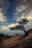 Old mozhevelnik stands on a cliff above the sea Royalty Free Stock Photos