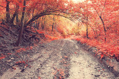 Old muddy forest road Royalty Free Stock Photo