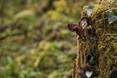 An old mushroom growing out of a tree stump. A mushroom trying to survive the autumn Stock Photos