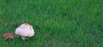 Old Mushroom on the Left Royalty Free Stock Photo