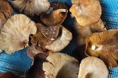 Old mushroom on white background Stock Images