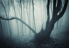 Old mysterious tree in a dark forest Royalty Free Stock Images